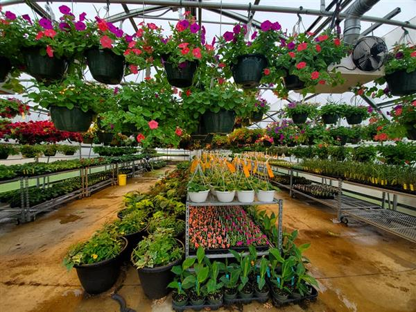 Career Center greenhouses opening to public for annual sale
